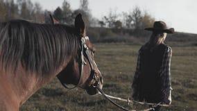 Primo piano di bello cavallo che cammina e che guarda fisso sul campo del prato alla mattina soleggiata stock footage