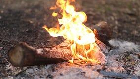 Primo piano di bello fumo bianco da un fuoco di accampamento stock footage