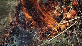 Primo piano di bello movimento lento del fuoco archivi video