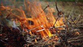 Primo piano di bello movimento lento del fuoco stock footage