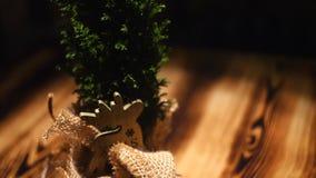 Primo piano di bello piccolo ginepro di Natale in una condizione del vaso su una tavola di legno Pagina Piante esotiche dell'inte archivi video