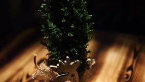 Primo piano di bello piccolo ginepro di Natale in una condizione del vaso su una tavola di legno Pagina Piante esotiche dell'inte video d archivio