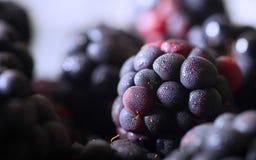 Primo piano di Blackberry Fotografia Stock
