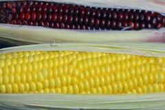 Primo piano di cereale fresco Fotografie Stock