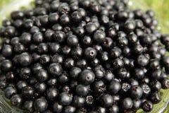 Primo piano di Chokeberries Fotografie Stock