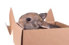 Primo piano di cibo sveglio del coniglio Immagini Stock Libere da Diritti
