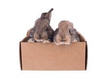 Primo piano di cibo sveglio del coniglio Immagine Stock