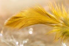 Primo piano di colore dell'oro della piuma di uccello Fuoco selettivo Fotografie Stock