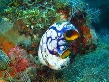 Primo piano di corallo molle Indonesia Sulawesi immagine stock