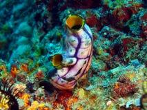 Primo piano di corallo molle Indonesia Sulawesi fotografia stock