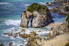 Primo piano di formazione rocciosa della testa di cavallo sulla riva in NSW, Australia dell'oceano Immagini Stock Libere da Diritti