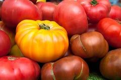 Primo piano di fresco, maturo, sano, pomodori di cimelio Fotografie Stock Libere da Diritti