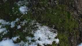 Primo piano di fusione della neve stock footage
