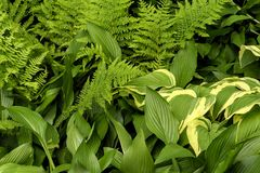 Primo piano di grande, di piccolo, largamente e le foglie verdi lunghe Immagine Stock