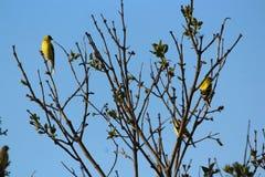 Primo piano di immagine di fotografia dell'uccello della fauna selvatica della natura immagine stock libera da diritti