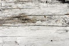 Primo piano di legno del recinto di struttura del fondo Copi il testo dello spazio Fotografia Stock Libera da Diritti