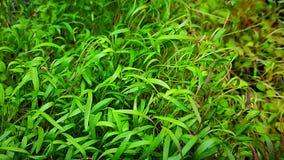 Primo piano di Microgreens immagini stock