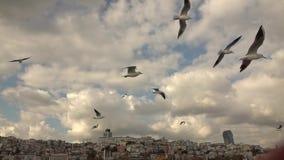 Primo piano di molti gabbiani nel cielo che sorvola il Bosphorus sui precedenti di Costantinopoli Movimento lento video d archivio