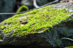 Primo piano di muschio su una roccia fotografie stock