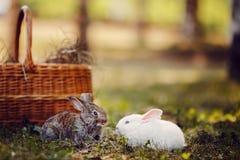 Primo piano di piccole lepri dei conigli dei bambini immagini stock libere da diritti