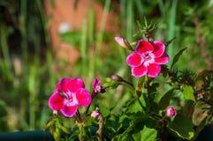 Primo piano di piccoli fiori Fotografie Stock
