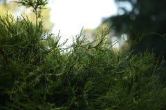 Primo piano di piccolo arbusto verde Immagini Stock Libere da Diritti