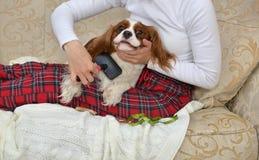 Primo piano di spazzolatura del cane fotografia stock libera da diritti