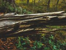 Primo piano di struttura del legname galleggiante sopra la vista del fondo della foresta fotografia stock libera da diritti