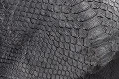 Primo piano di struttura del serpente del rettile, immagine del pitone dello snakeskin di zigzag di modo Fotografia Stock