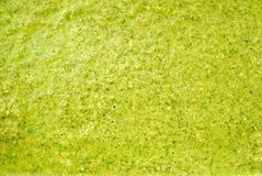 Primo piano di struttura del tè verde Immagini Stock Libere da Diritti