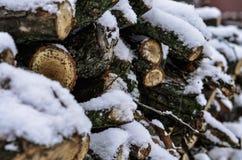Primo piano di un albero abbattuto innevato e legna da ardere con un fondo vago molle fotografia stock libera da diritti