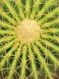 Primo piano di un cactus spinoso Fotografie Stock Libere da Diritti