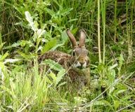 Primo piano di un coniglio che mastica sulle erbe Fotografia Stock