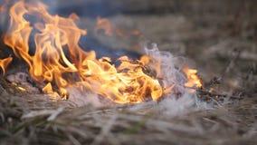 Primo piano di un'erba asciutta bruciante di cottura a vapore Fuoco video d archivio