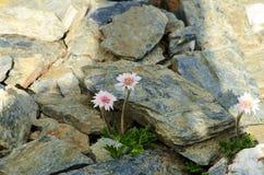 Primo piano di un fiore Fotografia Stock Libera da Diritti