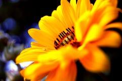 Primo piano di un fiore giallo Fotografia Stock