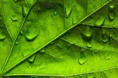 Primo piano di un foglio verde Fotografie Stock Libere da Diritti