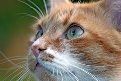 Primo piano di un gattino Immagini Stock Libere da Diritti