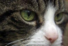 Primo piano di un gatto Fotografia Stock Libera da Diritti
