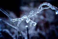 Ramo coperto di ghiaccio Immagine Stock