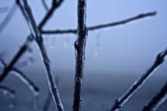 Ramo coperto di ghiaccio Fotografia Stock Libera da Diritti
