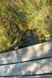 Primo piano di un sentiero per pedoni di legno attraverso l'IBM Moorland in Austria settentrionale, in autunno in anticipo fotografie stock