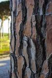 Primo piano di un tronco di pino che mostra la sua struttura di legno Spazio per redigere i testi e le progettazioni fotografia stock