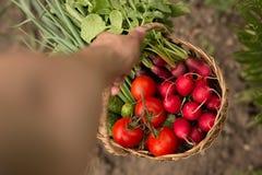 Primo piano di un uomo che tiene un canestro delle verdure e dei cetrioli Vista orizzontale fotografia stock libera da diritti