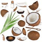 Primo piano di una collezione della noce di cocco su fondo bianco Fotografia Stock