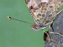 Primo piano di una farfalla immagine stock