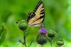 Primo piano di una farfalla variopinta che si alimenta un fiore in un campo fotografie stock
