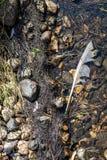 Primo piano di una fioritura d'alghe di sofferenza d'acqua dolce dall'eutrofizzazione severa dopo un periodo lungo di calore dura fotografia stock libera da diritti