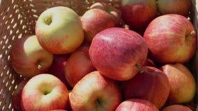 Primo piano di una mano che mette una mela rossa matura stock footage
