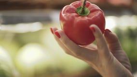 Primo piano di una mano femminile che tiene un grande peperone stock footage